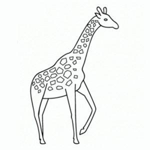como-dibujar-jirafas