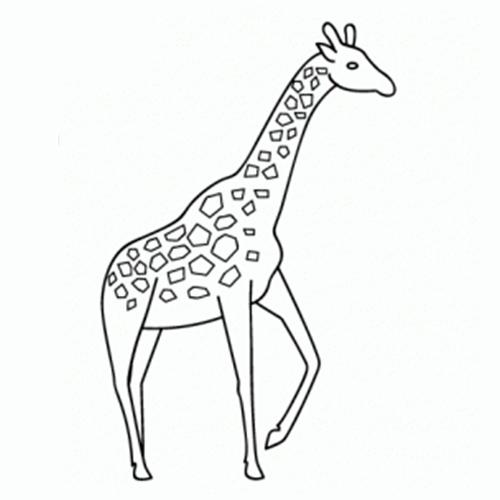 Cómo Dibujar Una Jirafa Comodibujarclub
