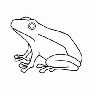como-dibujar-ranas