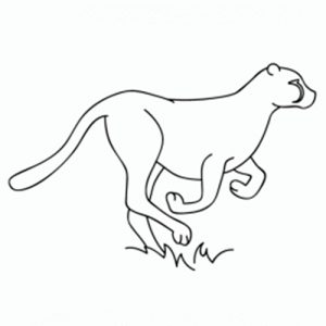 como-dibujar-un-guepardo
