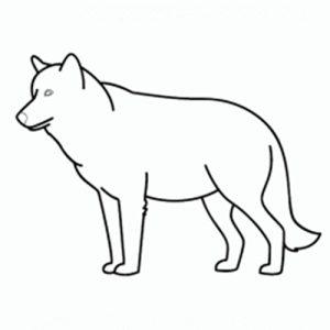 como-dibujar-un-lobo