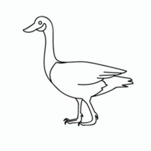 como-dibujar-un-pato