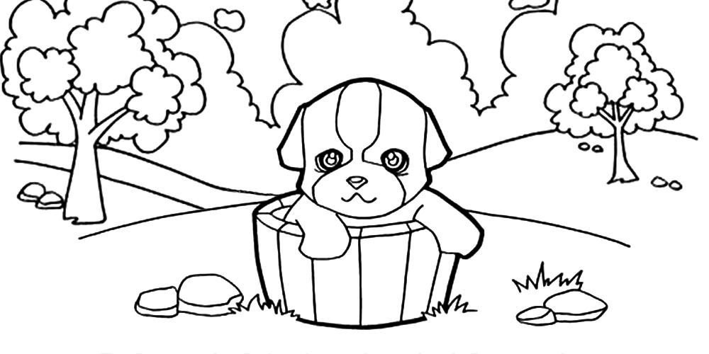 Dibujar animales domésticos