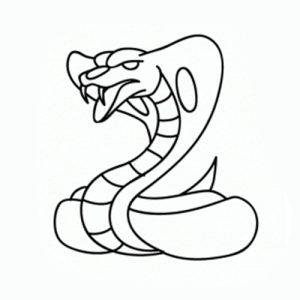 Cómo Dibujar Animales De La Selva Comodibujarclub