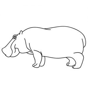 dibujar hipopótamo fácil paso a paso para niños colorear