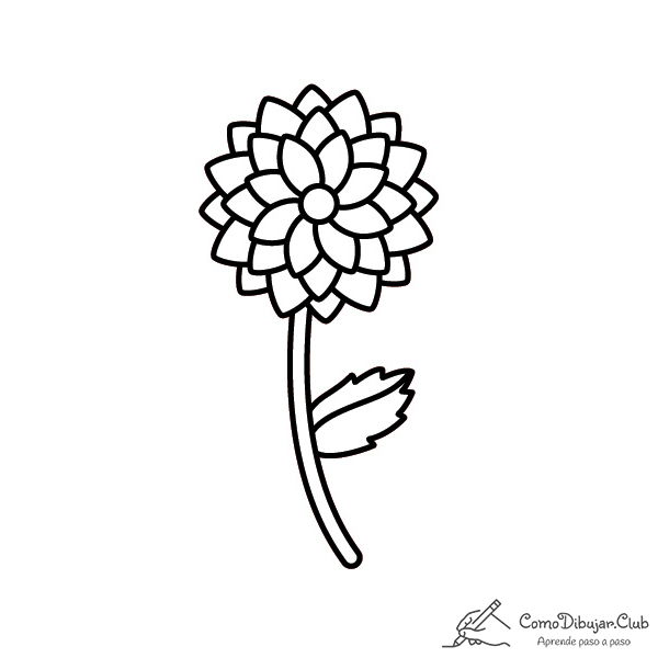 flor dalia dibujo colorear pintar imprimir